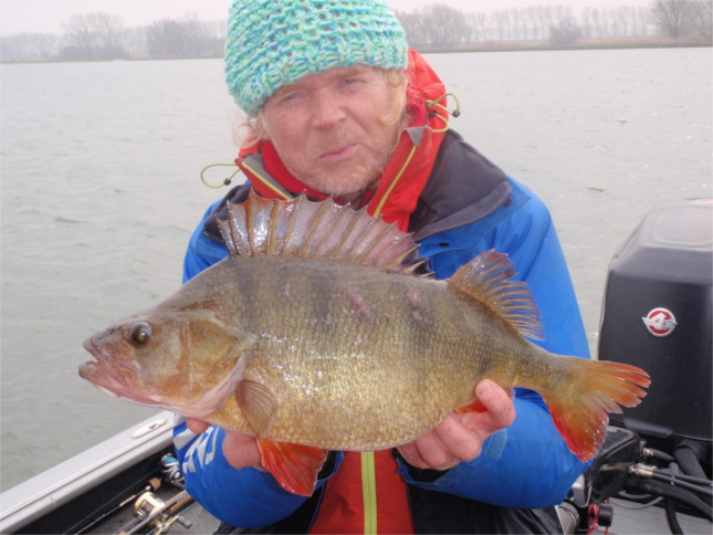 Perch Magician Willem Stolk with a beautiful 5lb 11oz Perch