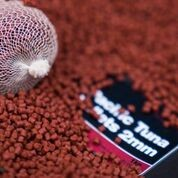 C.C. MOORE PACIFIC TUNA PELLETS 2MM product image