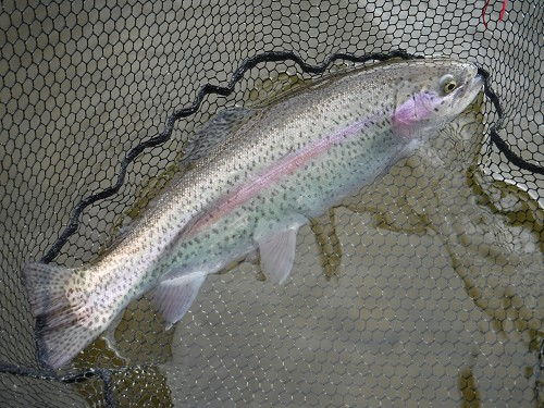 FLY FISHING SPRINGHILL PEMBURY	March - June product image