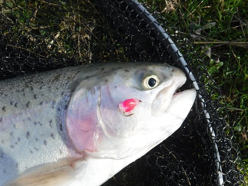 FLY FISHING TENTERDEN TROUT WATERS TN30 6XAMarch - June product image